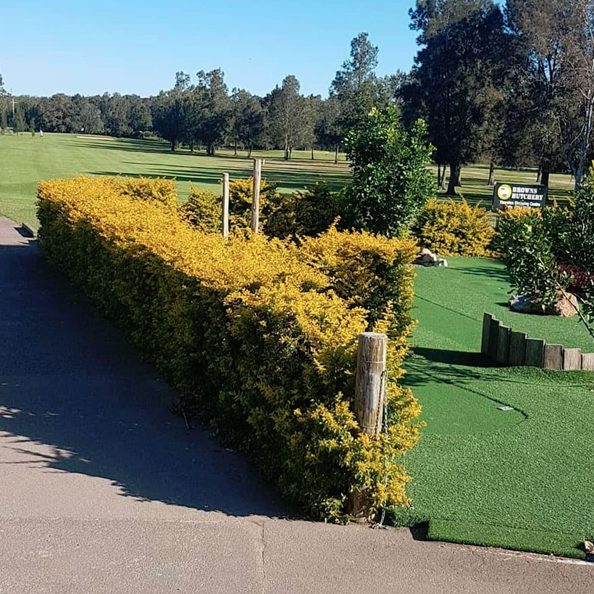 Beresfield Golf Course