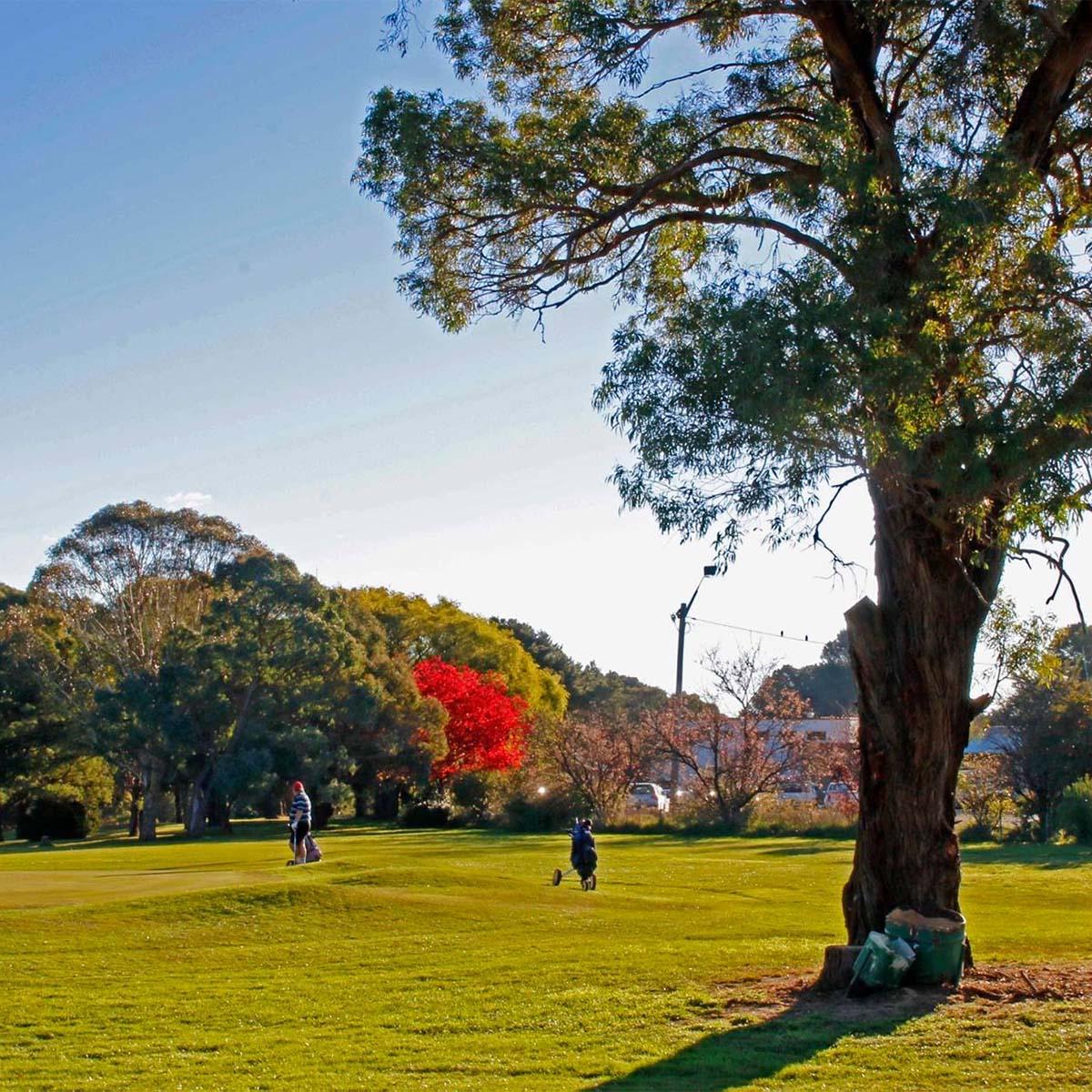 scenery around the Braidwood Servicemens Club Golf Course