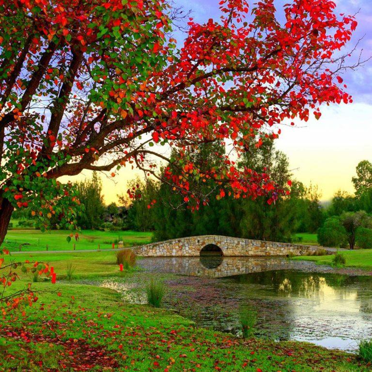 autumn flowers in bloom at Camden Golf Club
