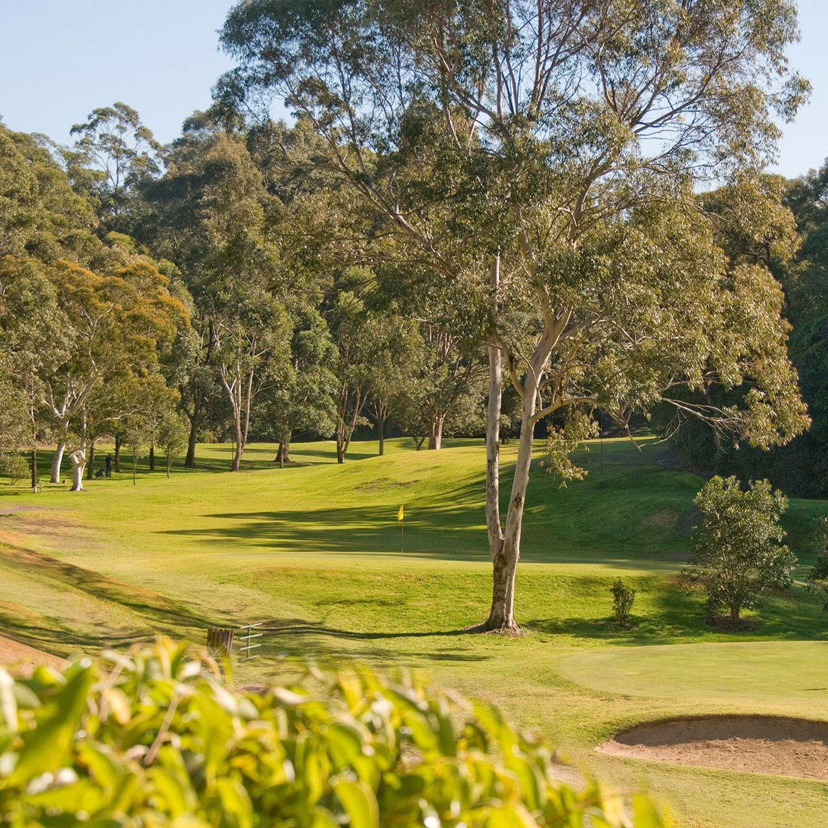 Views of the golf course at Lane Cove Golf Club