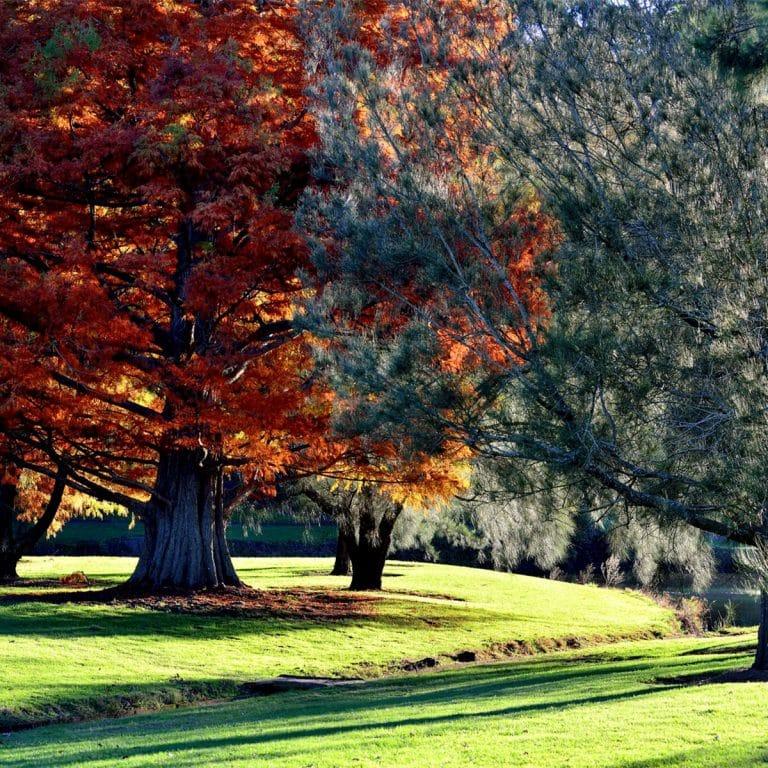 Nowra Golf Club supplied