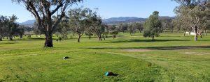 Scene of Quirindi RSL Golf Course