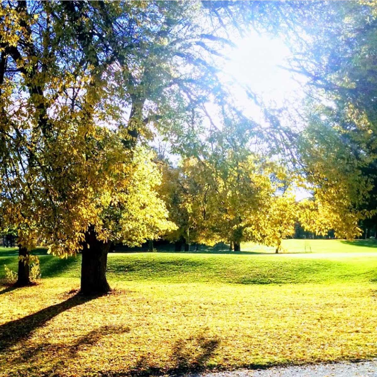 Scenes around the parkland layout at Yowani Country Club