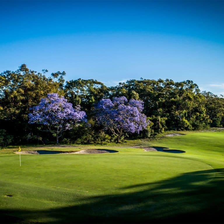 Newcastle Golf Club Jacaranda