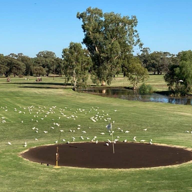Nyngan Golf Club