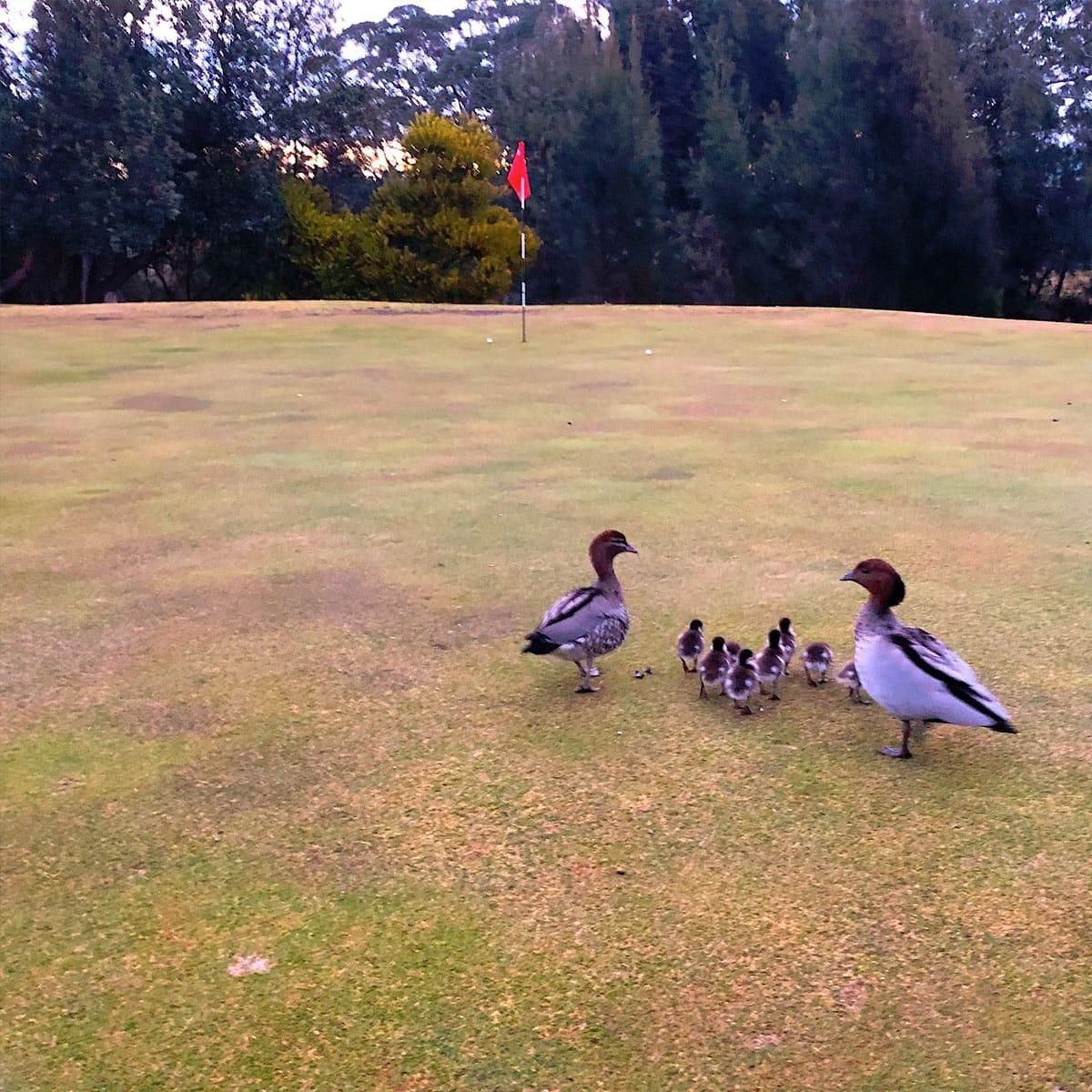 The Moorings Golf Complex