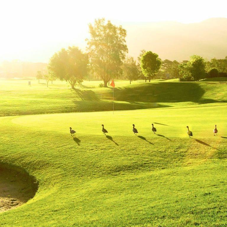 Calderwood Valley Golf Club fb4